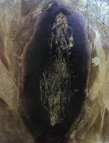 vulv phanthom